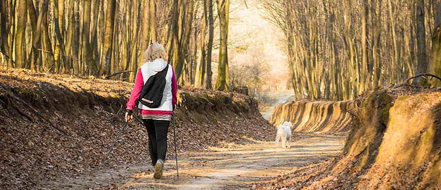 nordic walking - erdei séta